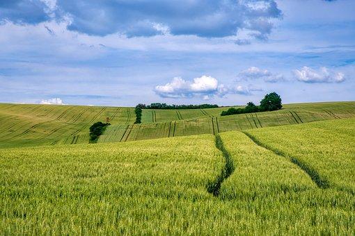 Meadow, Field, Grass, Landscape, Wheat, Nature, Scenic
