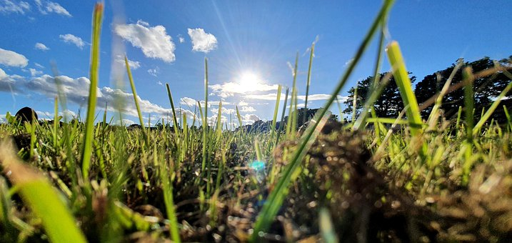Grass, Ground, Perspective, Sunshine, Nature, Sun