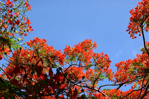 Flowers, Tree, Branches, Botanical, Colorful, Crimson
