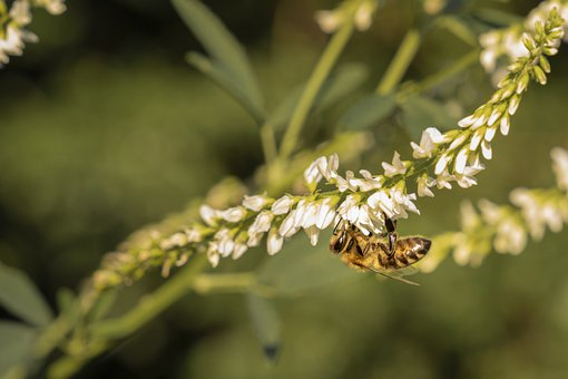 Bee, Insect, Pollination, Nature, Spring
