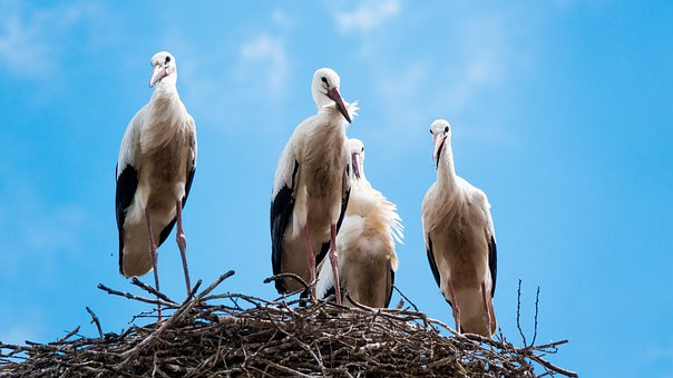 Stork, Nest, Sky, Cloud, Birds, Nature, Wildlife