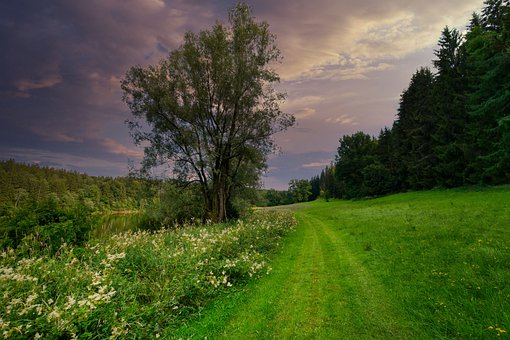 Forest, Meadow, Tree, Flowers, Clouds, Evening