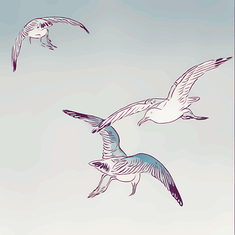Seagulls, Gulls, Birds, Flight, Flying, Wings, Feathers