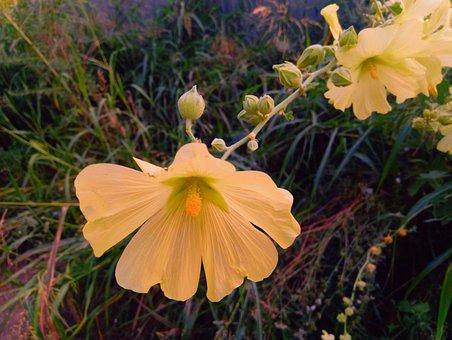 Flowers, Petals, Stamens, Pistil, Sunset, Garden