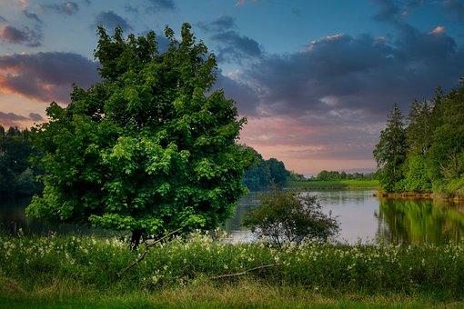 Tree, Lake, Forest, Meadow, Flowers, Sky, Clouds