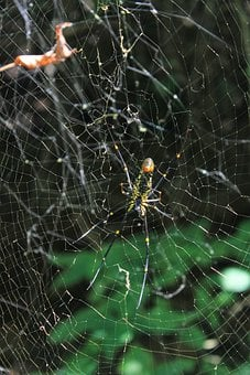 Spider, Web, Cobweb, Insect, Nature, Spiderweb