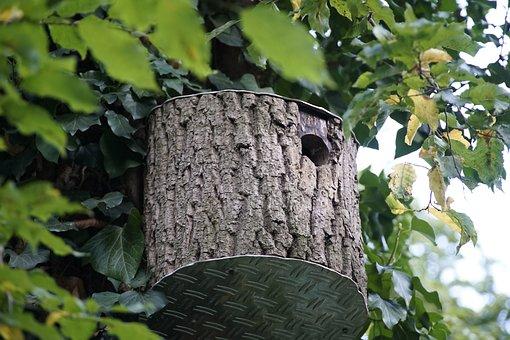Birdhouse, Nest, Box, Handmade, Wooden