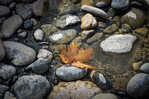 Leaf, Stones, River, Rocks, Nature, Water, Natural