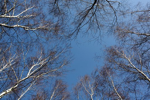 Trees, Branches, Forest, Sky, Nature, Atmosphere