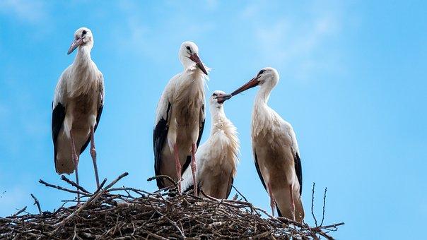 Stork, Nest, Sky, Cloud, Birds, Nature, Wildlife