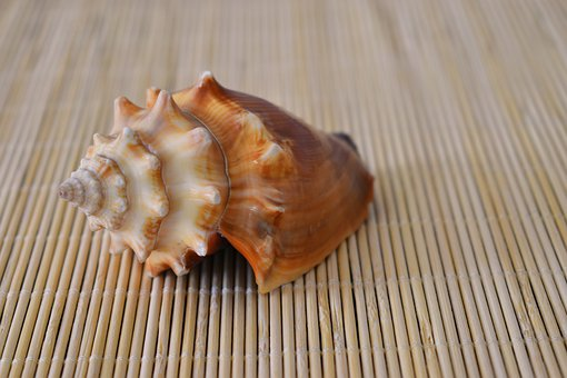 Shell, Sea, Conch, Wood, Nature, Ocean, Animal, Empty
