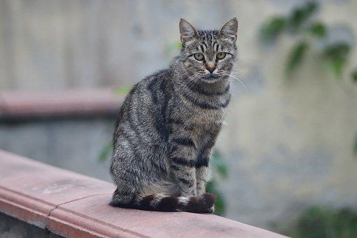 Cat, Feline, Kitty, Kitten, Sitting, Edge, Domestic