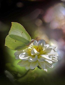 Butterfly, Insect, Flower, Macro, Summer, Garden