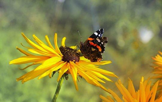 Butterfly, Insect, Flower, Garden, Summer, Nature