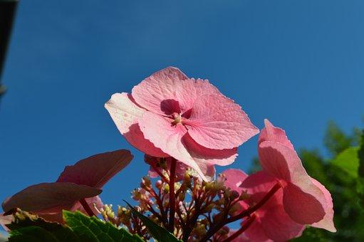 Flower, Petal, Sky, Blossom, Plant, Rose, Spring