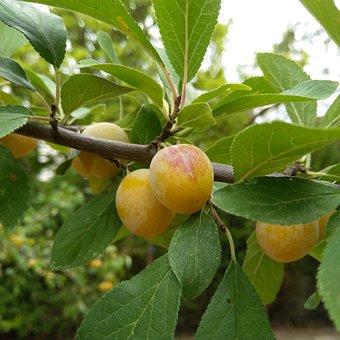 Trees, Leaves, Foliage, Fruit, Organic, Seed, Texture