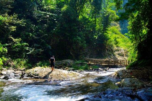 Man, River, Stream, Bridge, Nature, Landscape, Water