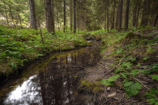 Forest, River, Stream, Weeds, Plants, Trees, Underwood
