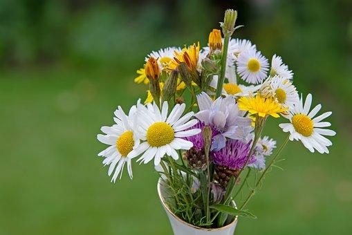 Flowers, Wild Flowers, Daisy, Summer Flower