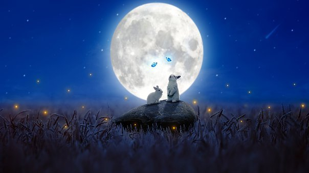 Rabbits, Butterflies, Bunnies, Moon, Moonlight, Rock