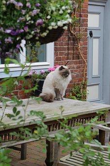 Cat, Feline, Flowers, Kitty, Kitten, Lübeck, Sitting