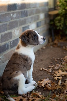 Puppy, Dog, Pet, Mixed Breed Puppy, Animal, Cute, Snout