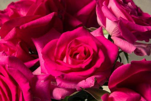 Roses, Flowers, Petals, Bouquet, Bloom, Romance, Floral