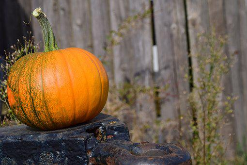 Pumpkin, Trailers, Wooden Wall, Autumn, Red, Yellow