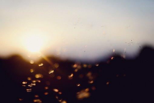 Sunset, Bokeh, Dandelion, Summer, Direct Light