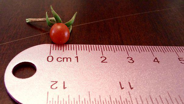 Tomato, Tiny, Ruler, Red, Food, Fruit, Cherry, Ripe