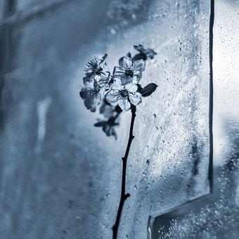 Ice, Flower, Dewy