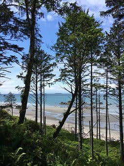 Washington State, Trees, Douglas Fir, Coastline, Ocean