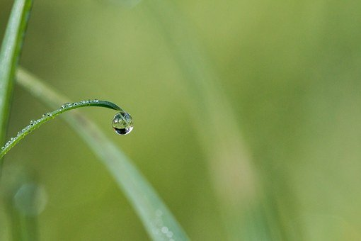 Drip, Dew, Dewdrop, Drop Of Water, Morgentau, Water
