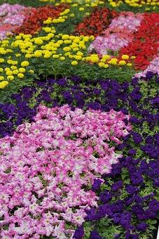 Flowers, Bed, Garden, Bloom, Park, Plant, Spring