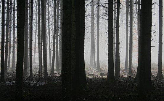 Forest, Trees, Fog, Autumn, Gloomy, Mysterious