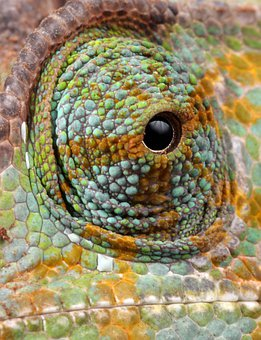 Chameleon, Eye, Details, Close-up, Macro, Scaly, Scales
