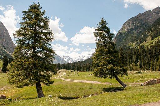 Spruce, Tree, Mountains, Sky, Kyrgyzstan, Nature