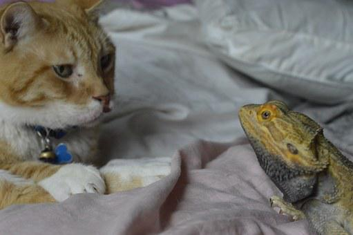 Cat, Dragon, Reptile, Feline, Animal, Eye To Eye