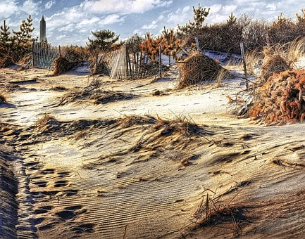 Dunes, Beach, Sand, Fence, Buffer, Scrub Brush