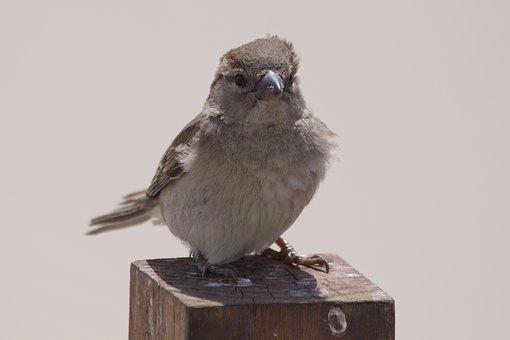Bird, Animal, Sparrow, Nature, Cute, Views Direct