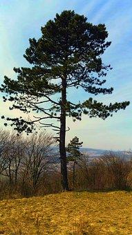 Ihličnan, Tree, The Sky, Parking Lot, Nature, Forest
