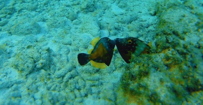 Coral, Underwater, Reef, Sea, Nature, Tropical, Ocean