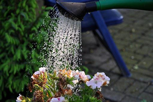 Flowers, Watering Can, Water, Casting, Water Flowers