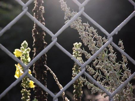 Fence, Mulleins, Wire Mesh Fence, Nature, Scrub, Plant