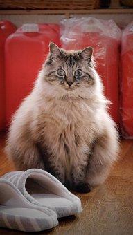 Cat, Feline, Kitty, Kitten, Drawing, Sit, Domestic