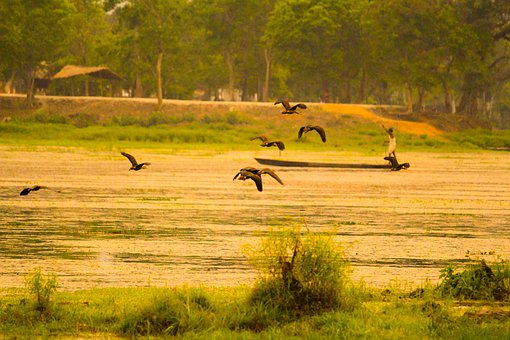 Man, Boat, Lake, Birds, Wings, Flying, Grass, Water