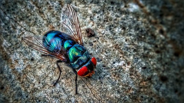 Fly, Housefly, Insect, Wings, Legs, Neon, Nature