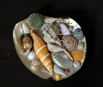 Sea-shells, Decoration, Decorative, Pattern, Maritime