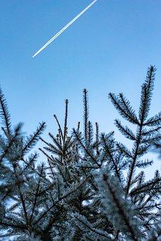 Tree, Fir, Conifer, Winter, Sky