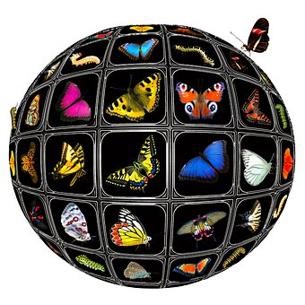 Butterflies, Insect, Wings, Ball, Sphere, Collection